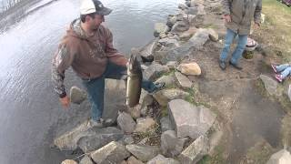 getlinkyoutube.com-Walleye fishing. HUGE MUSKY CAUGHT!!