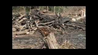 DREFF - Trailer Reserva de la Biosfera: Jaragua, Bahoruco y Enriquillo (Bahoruco)