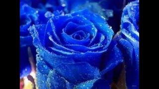 getlinkyoutube.com-اجمل انواع الورود في العالم * The most beautiful types of roses in the world