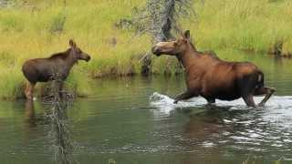 getlinkyoutube.com-The Alaskan Adventure: 5 days in Denali National Park and Preserve