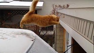 getlinkyoutube.com-Funny Cat Jump Fail 2015