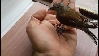 شاهد هذا الطريقة في ترويض الطيور