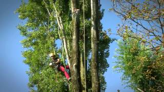 getlinkyoutube.com-Abbattimento in tree climbing
