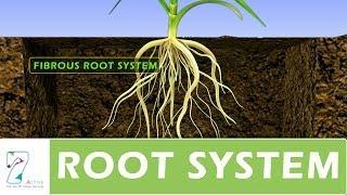 getlinkyoutube.com-ROOT SYSTEM