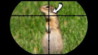 getlinkyoutube.com-Ground Squirrel Pest Control - Poison vs Pellets [contains hunting]