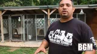getlinkyoutube.com-American Bully: Da Worlds Urs Kennels Bring you into their Backyard.