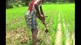 धान की फसल से खरपतवार हटाने के लिए करें वीडर यंत्र का इस्तेमाल