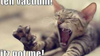 getlinkyoutube.com-Really Funny Cat Pictures!!!