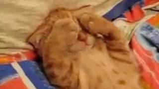 getlinkyoutube.com-Gato muito fofo não quer acordar