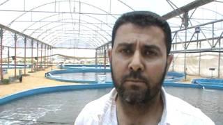 getlinkyoutube.com-Gaza : Fish farms in Gaza.vob
