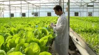 getlinkyoutube.com-Hydroponic lettuce greenhouse factory --  Automated