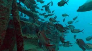 getlinkyoutube.com-Porto de Galinhas - Mergulho nos naufrágios