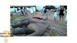 getlinkyoutube.com-GRABAN DINOSAURIO EN RUSIA? VIDEO REAL 2015  (DESCRUBIENDO)