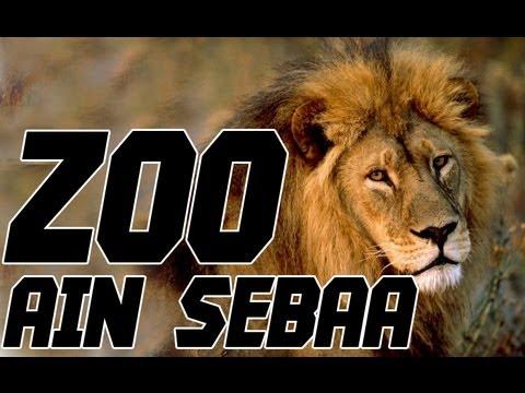 Belonging.. | Zoo Ain Sebaa | YASSINE JARRAM | الحيوانات المتوحشة في المغرب