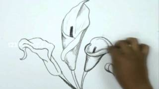 getlinkyoutube.com-How to Draw a Calla Lily