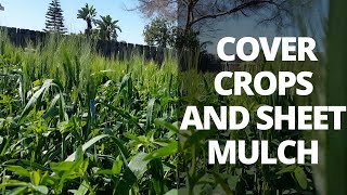 Barren to Fertile Soil: Using Cover Crops and Sheet Mulch