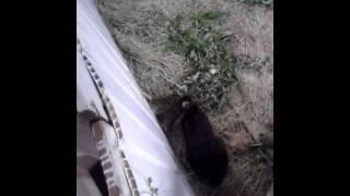 getlinkyoutube.com-Кролики в яме!!