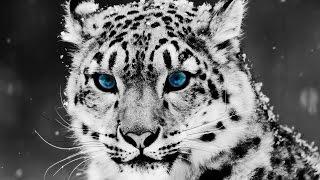 getlinkyoutube.com-Los 10 Animales más Hermosos del Mundo