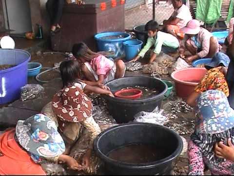 Don Bosco Mission Kambodscha Teil 2