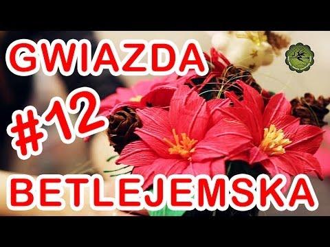 Kwiatki z bibuły #12 - gwiazda betlejemska