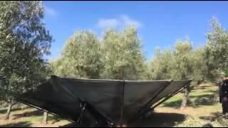 getlinkyoutube.com-πρωτοποριακό μηχάνημα μαζεύει τις ελιές