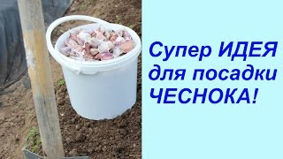 getlinkyoutube.com-Супер ИДЕЯ для посадки ЧЕСНОКА!