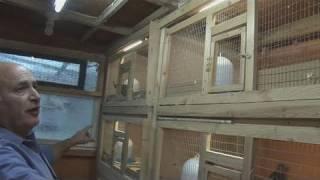 getlinkyoutube.com-How To Create A Quail Cage