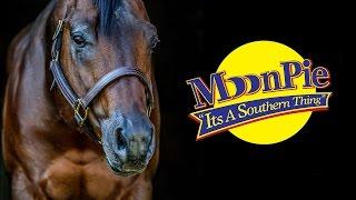 getlinkyoutube.com-Its A Southern Thing: 2010 Bay AQHA Stallion