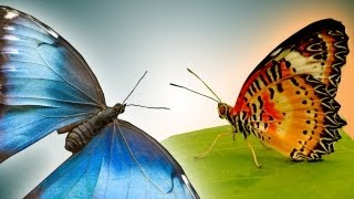 getlinkyoutube.com-Butterfly in epic slow motion - Slo Mo #22 - Earth Unplugged
