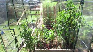getlinkyoutube.com-Fall Gardening: Covering Your Raised Bed Peppers & Tomatoes with a Greenhouse 1 of 4: TRG 2014