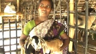 getlinkyoutube.com-பரண்மேல் வெள்ளாடு வளர்ப்பு