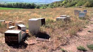 getlinkyoutube.com-To Bee Or Not To Bee - A Year in the Life of a Beekeeper