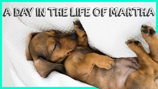 A DAY IN THE LIFE OF MARTHA!