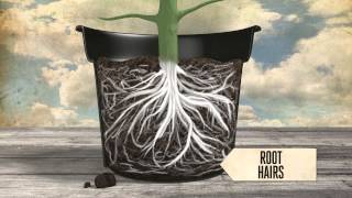getlinkyoutube.com-Healthy plant roots - EP01 S2 by CANNA