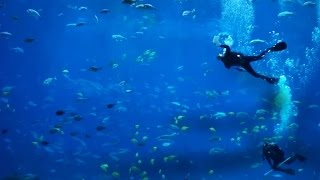 getlinkyoutube.com-6 HOUR Aquarium - Ocean Voyager II - with real Scuba Divers and Ambient Sound (HD)
