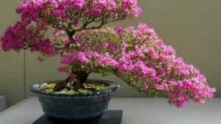 getlinkyoutube.com-Bonsai