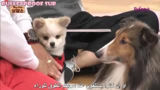 getlinkyoutube.com-[ARABIC SUB] 151111 MY PET CLINIC (4-7)-2