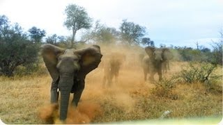 Elephant ATTACKS Safari Jeep   EXCLUSIVE Footage [Never Before Seen]