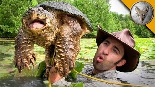 Diving for Snapping Turtles!