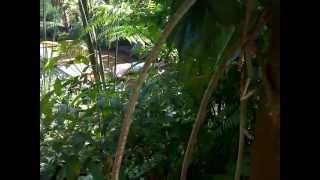 getlinkyoutube.com-BOHAY MANDI DI KALI...HOOOTTT...