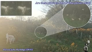 getlinkyoutube.com-Are these pictures PROOF that fairies exist?