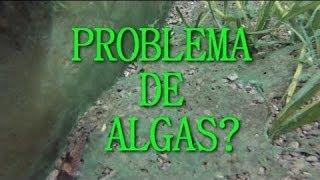 getlinkyoutube.com-Los vidrios de mi acuario estan verdes!!! (algas en el acuario)