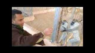 رحلة فريق بلدي يا غزة في حديقة الحيوان