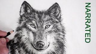 getlinkyoutube.com-How to Draw a Realistic Wolf: Narrated