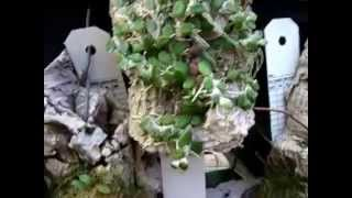 getlinkyoutube.com-San Diego Zoo - orchid greenhouse