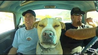 Roadkill Show Q&A With Freiburger, Finnegan, and The Dog: October 2013