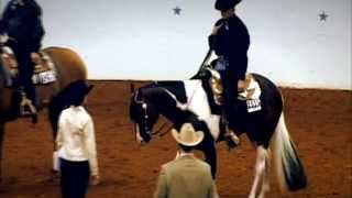 getlinkyoutube.com-Gibbs Show Horses