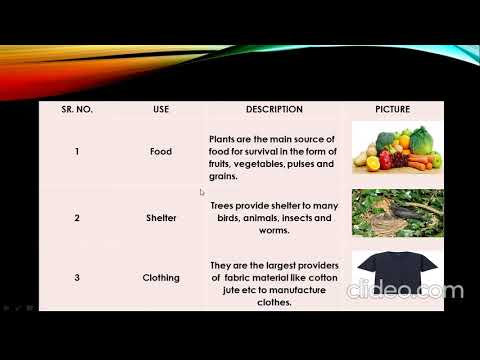CLASS 3 SCIENCE CHAPTER 4 ( IMPORTANCE OF PLANTS) PART 1