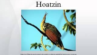 Hoatzin