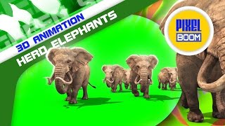 getlinkyoutube.com-Green Screen African Savanna Herd of Elephants Walking - Footage PixelBoom